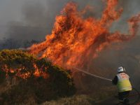 Gorse Fires  – What are they and what to know.